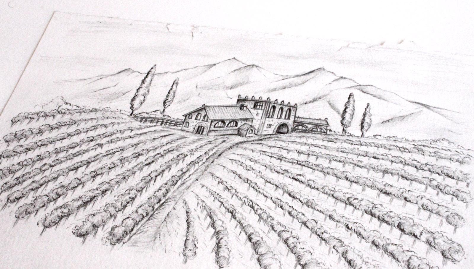 Ilustración a carboncillo viñedos y bodega de vinos